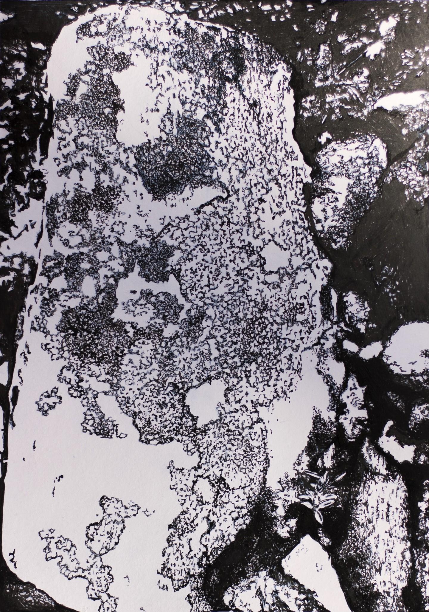 Przemek Kret - Arctic lichens study