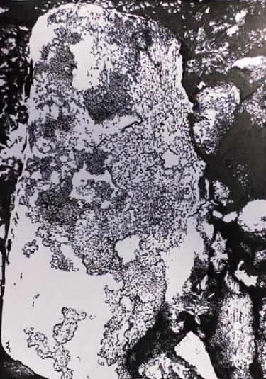 Arctic lichens study